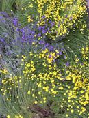Swirling Flowers