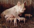 Mum & Family