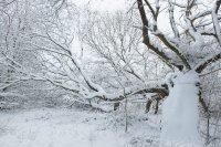 Snowscene Chattendenwood+farmland 2018 f 7.1DSCF0508