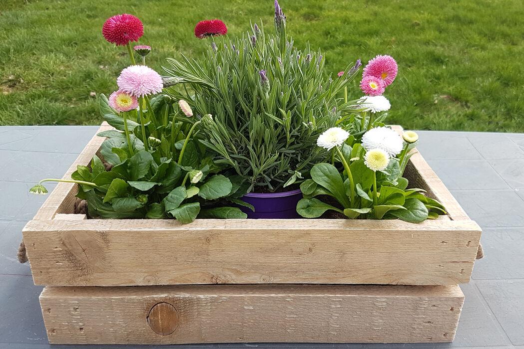 plant box in crates