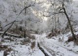 Winter Cannock Chase