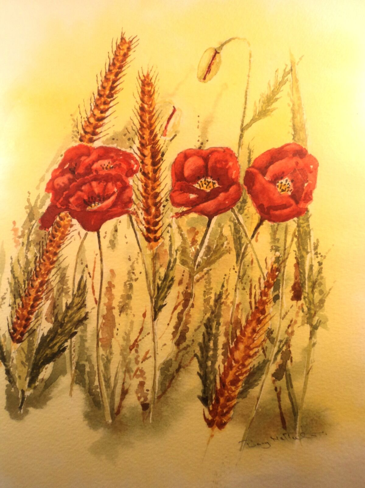 Poppies on a corn field