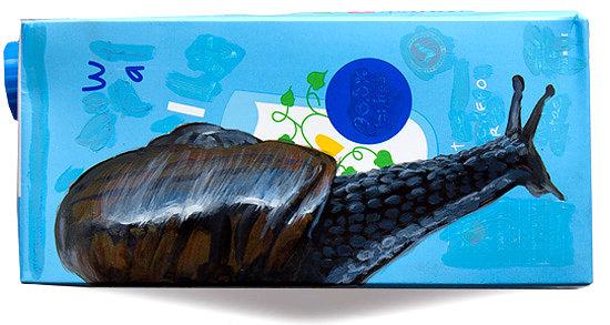 Day 66 -  Powelliphanta Snail