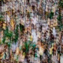 Autumn Central Park