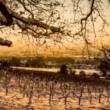 Ledbury Orchard Sunset
