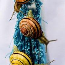 Snail Brush