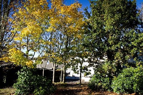 Borrowfield Autumn