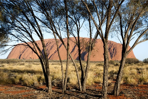 Trees at Ayers Rock