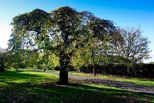West End Park Autumn