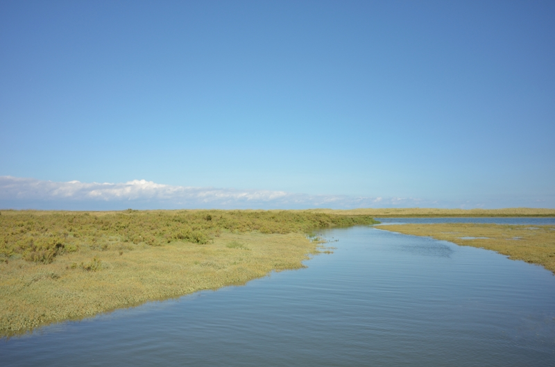 Scolt Head creek