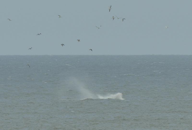 webwhale12