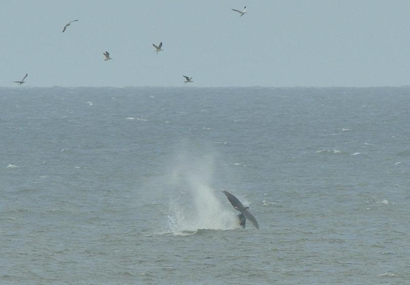 webwhale13