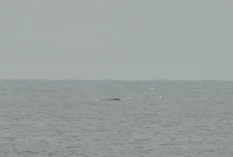 webwhale2