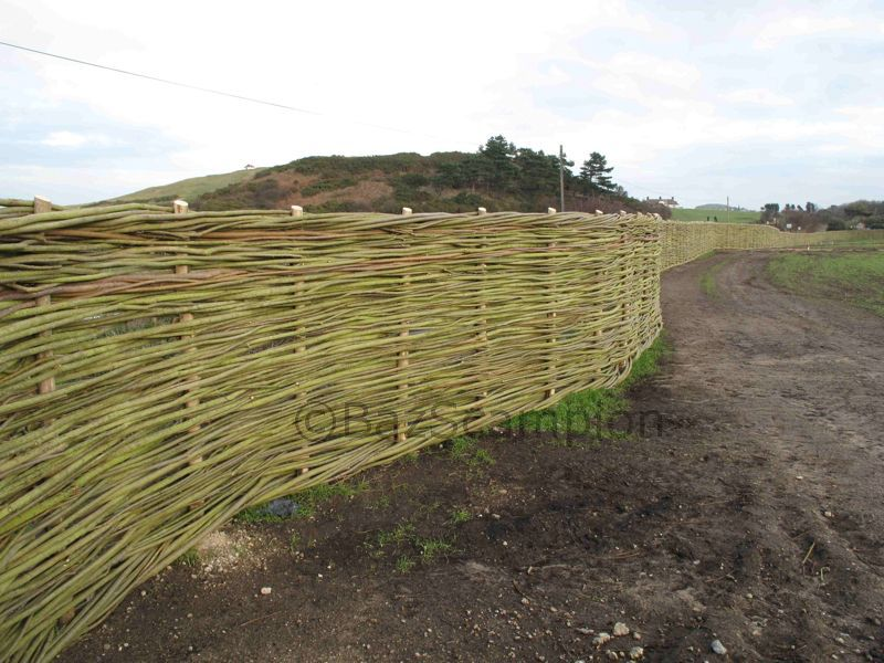 woven willow Fencing for greenhouse project Sherringham