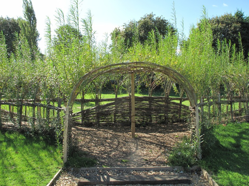 Living willow tunnel made by Burnham willow