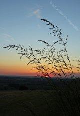 Sunset Grass II