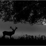 One misty dark night