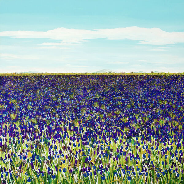 Purple Iris Field