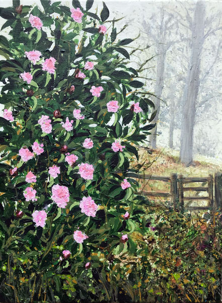 Misty Morning :Leith Hill