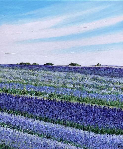 lavender flowers field lavenderfield Becca Clegg