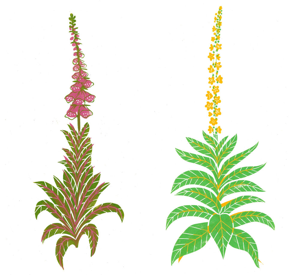 Tall Wildflowers