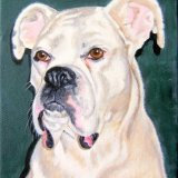 Boxer SOLD