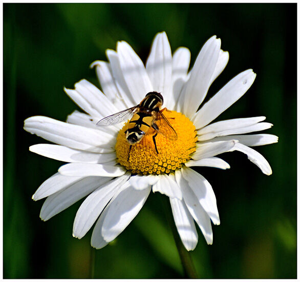 Third: Pollen hunter