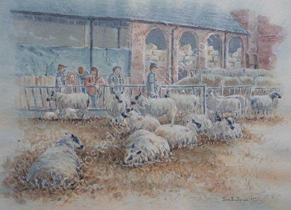 The Lambing Shed, Erddig Farm, Wrexham
