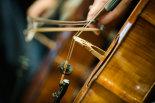The-cello-section-©www.benjaminharte.co.uk-28