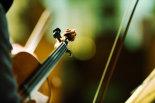 Violin-and-bokeh-©www.benjaminharte.co.uk-9
