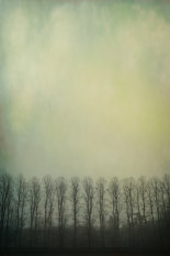 trees-in-mist-©benjaminharte