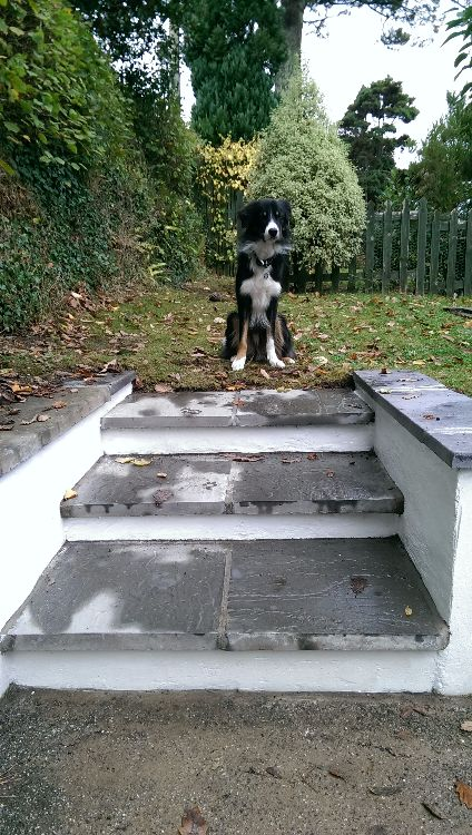 Cut into existing wall to form slab steps, blocked & rendered sides, finished with slate coping & painted.