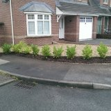Laurels planted with membrane & mulch