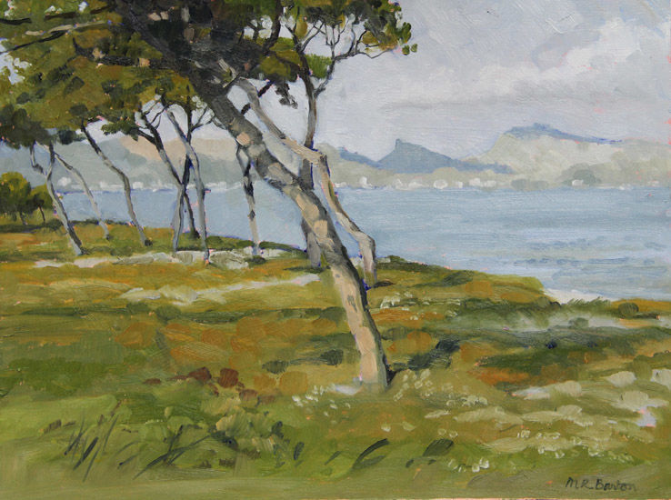 Maritime Pines, looking across the bay of Puerto Pollensa, Mallorca