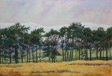 Pines at Tebay, Cumbria