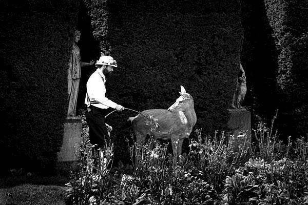 Morris and Deer