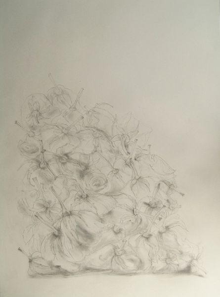 No. 48 Roses (2017) 59cm x 84cm