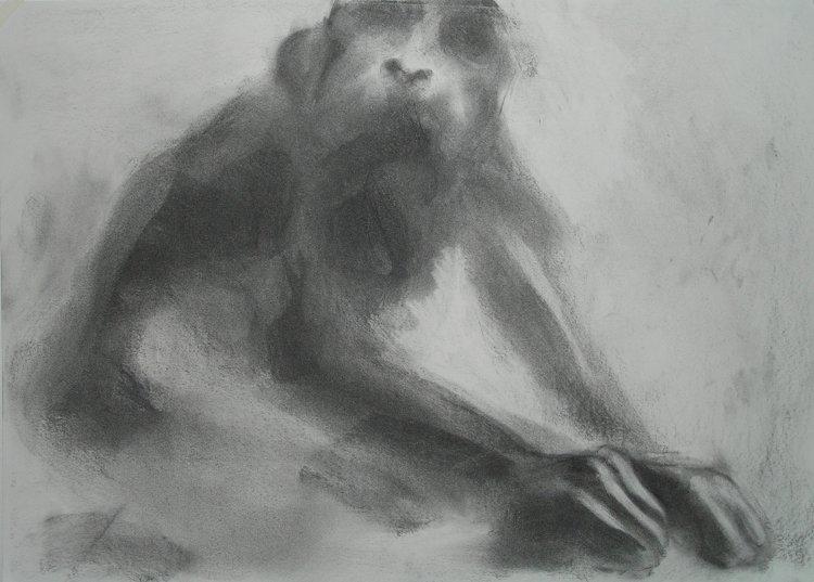 Monkey Remembers (2006) 42cm x 59cm charcoal on paper