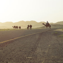 9 Beware Camels Crossing Roads