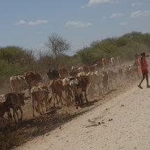 DSC 0033 Road to Amboseli