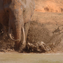DSC 0135 elephant enjoyed water hole Tsavo