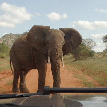 DSC 0158 Tsavo East National Park Elephants Have Right of Way