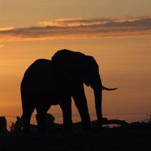 DSC 0245 Amboseli elephant
