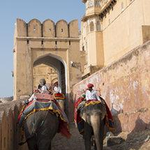 IND 5904 Elephants Amber Fort