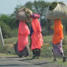 IND 6108a Women Farmers