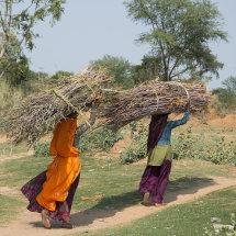 IND 6133 Farming Scenes Rajasthan