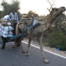 IND 6563 CamelCart