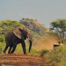 RHI 4472 Elephant crossing Elsa's Kopje