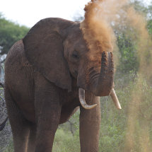 BAL9606 Spraying dust to keep insects away Tsavo