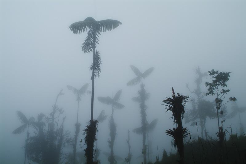 Cloud Forest, Mindo, Ecuador